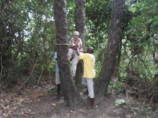 pas facile de grimper au cocotier!