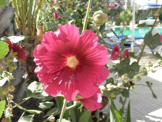 fleur endémique