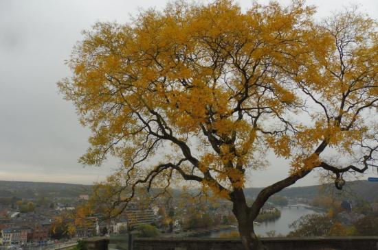 l'arbre jaune...